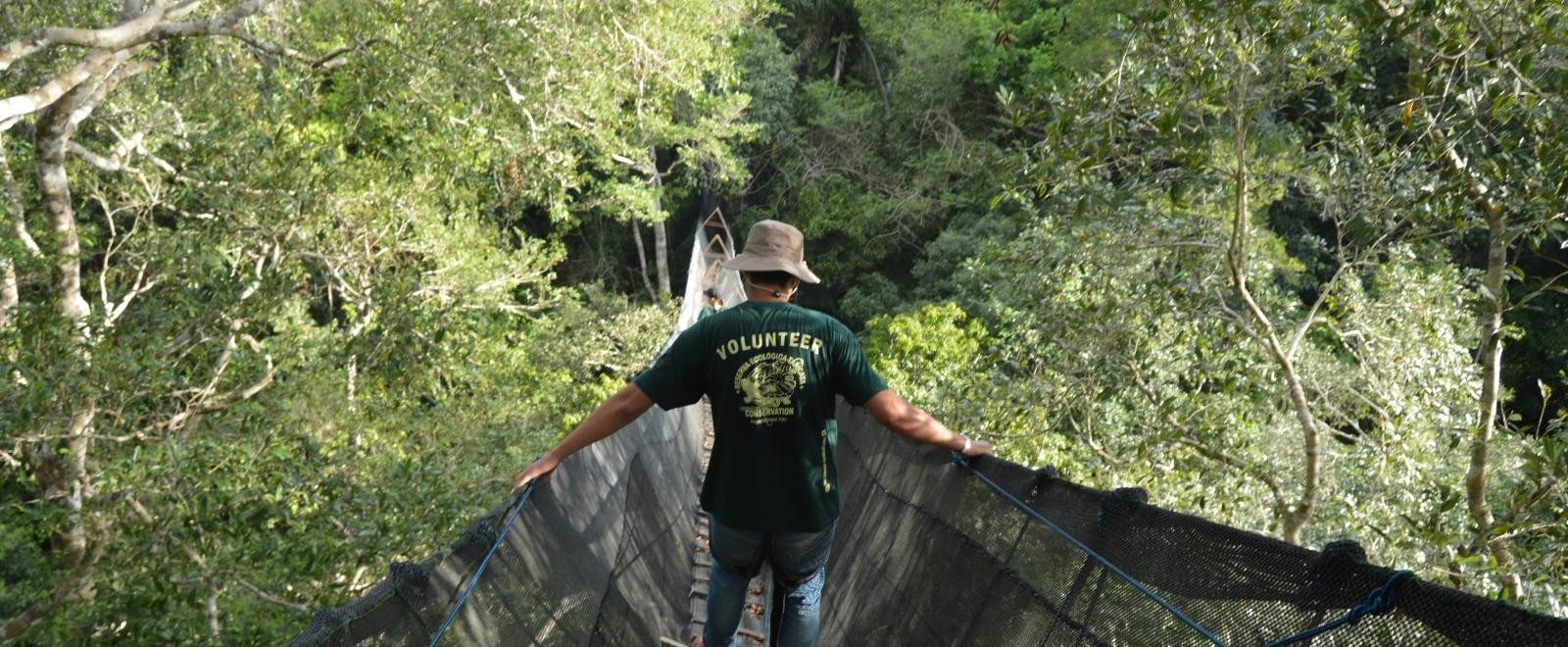 A Conservation volunteer crosses the tallest canopy walkway in South America on his volunteer holiday in Peru.